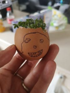 cress egg-heads for blooming well