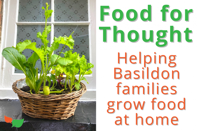 Food for Thought – Promoting growing food at home for Basildon residents