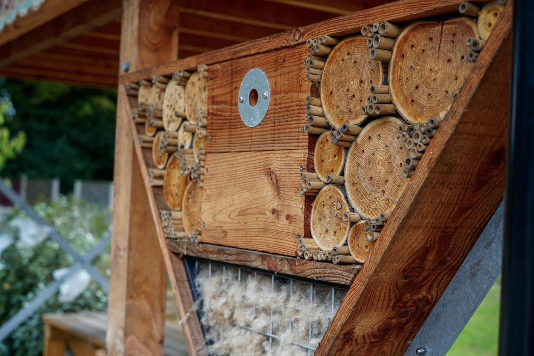 What are bug hotels and why you should build one at home