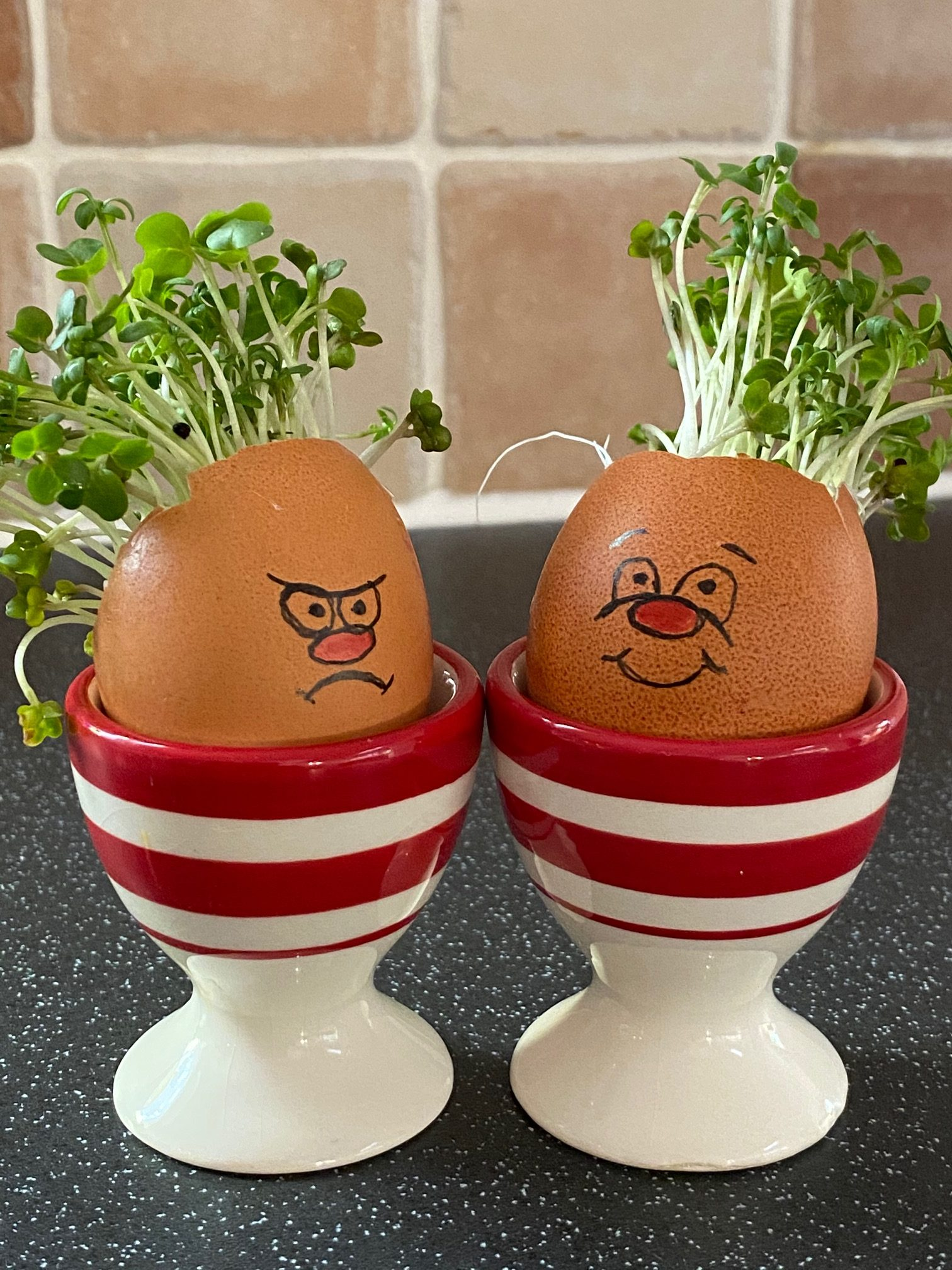 Cress heads with silly faces - an example of what you can make with Food for Thought