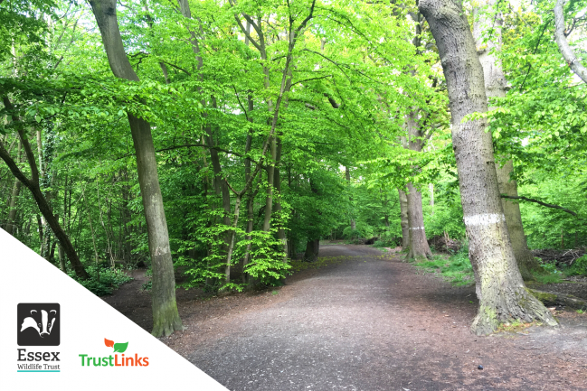 Essex Wildlife Trust: Nature Routes to explore this Mental Health Awareness Week!