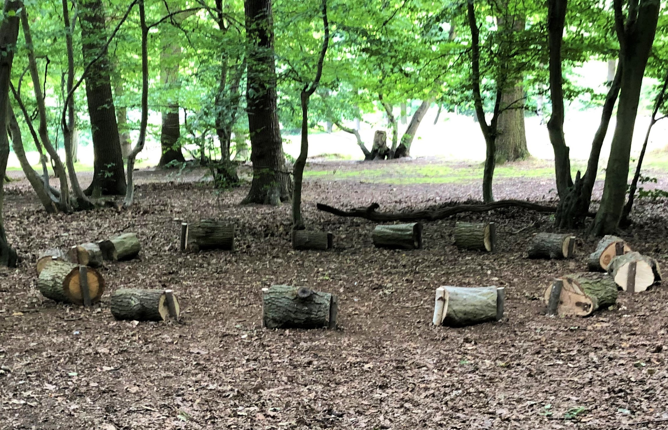 a circle of logs in the woods