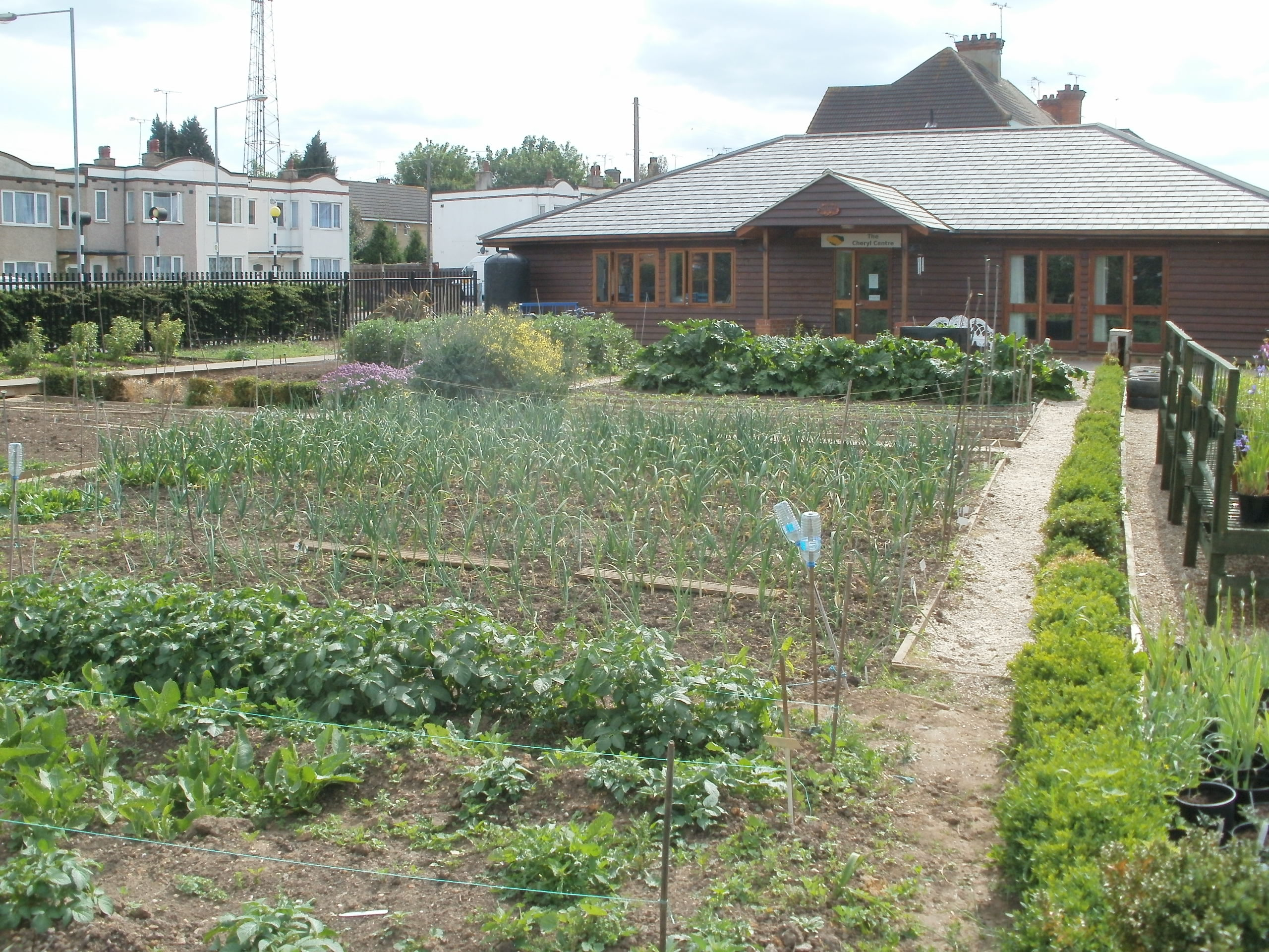 Growing Together Westcliff with new allotments in 2011